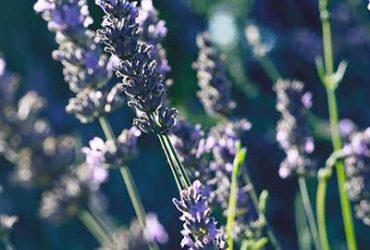 parfum aromatique